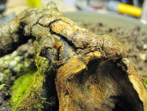 Xử lý gốc bonsai