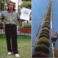 Cây Bonsai cao nhất thế giới