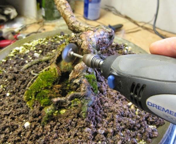 Mài gốc bonsai
