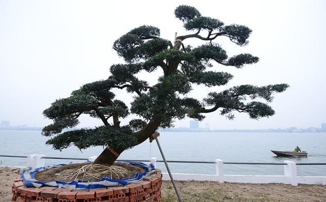 vuon-tung-1299266