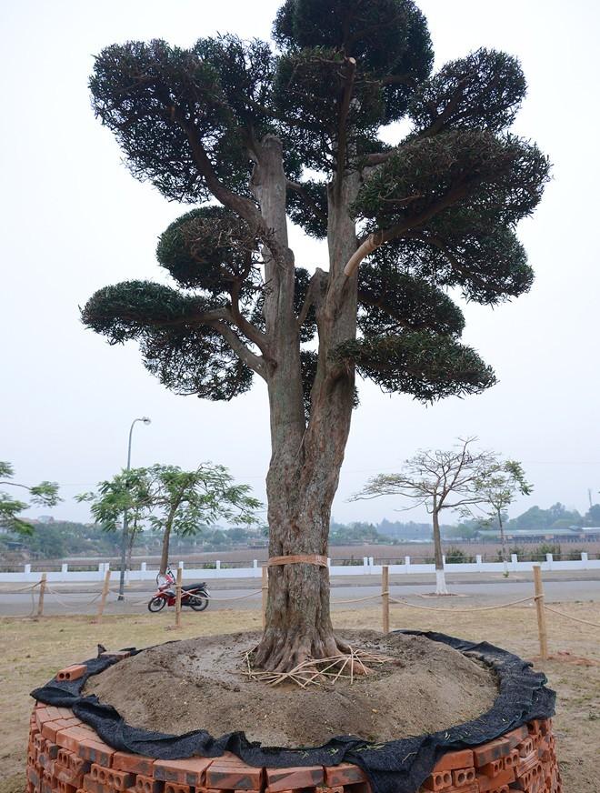 vuon-tung-1299270