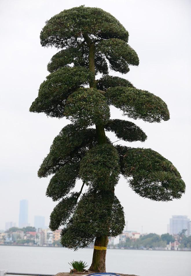 vuon-tung-1299271